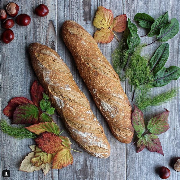 Spelt sourdough baguettes - no extra flouring needed here: the slashes are wide and defined