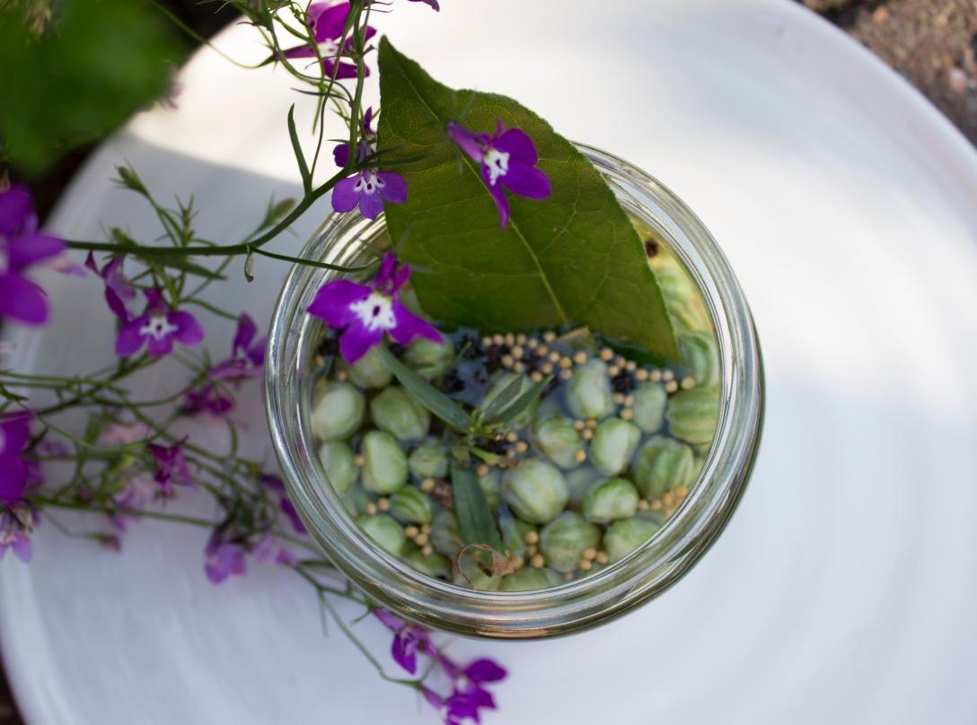 nasturtium capers recipe ink sugar spice blog